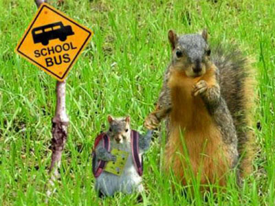 Squirrels Going To School